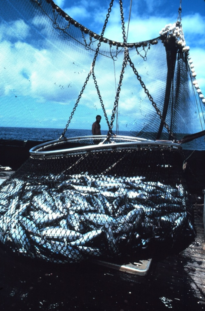 fishhaul