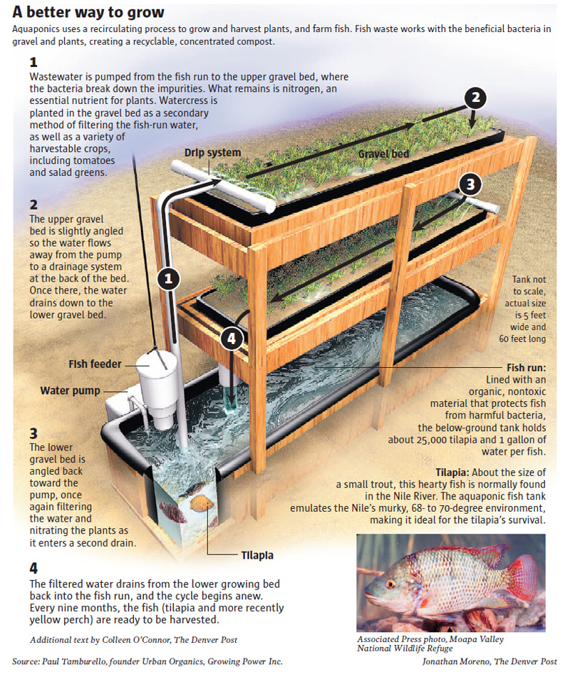 aquaponics-system-design-free-21