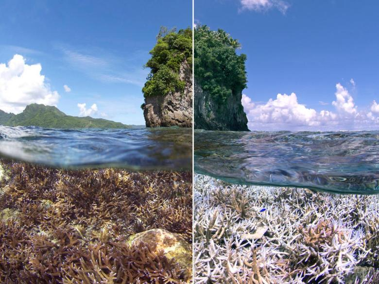 coral-reef-bleaching-2