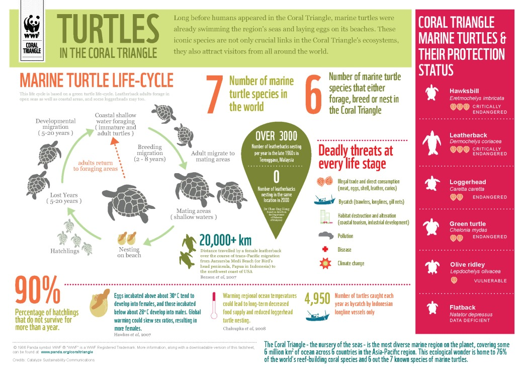 infographicmarineturtlescoraltriangle