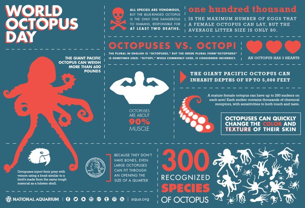 octopus_infographic1