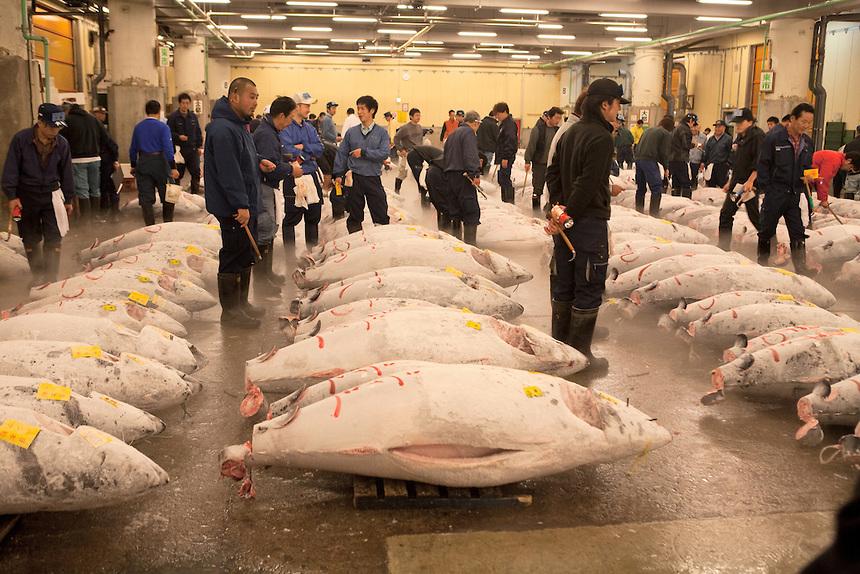 Tsukiji-Tuna-Auction