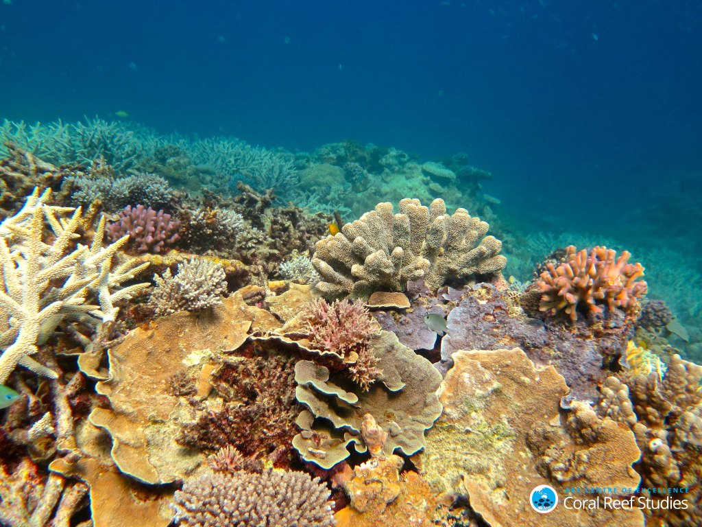 healthy-coral-in-the-capricorn-group-of-islands-southern-gbr-nov-2016